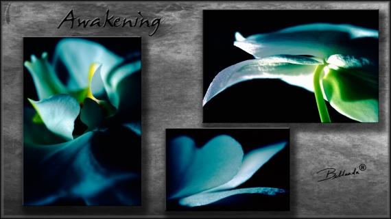 Awakening: Photographic Film Photography by Bellanda  ®