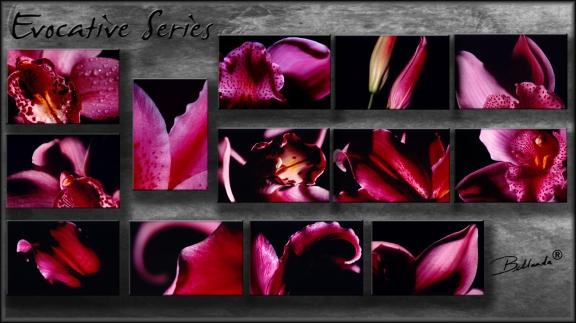 """Evocative Series"" Bellanda  ®"