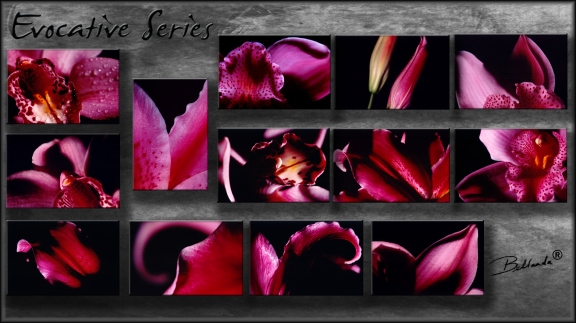 """Evocative Series"" Bellanda  ®"